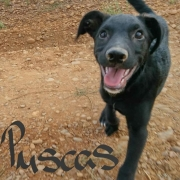 PUSCAS (m)